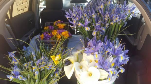Emmeline flowers